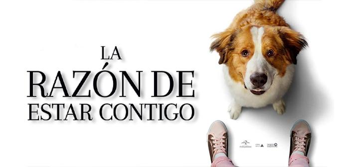Descargar Razón de Estar Contigo: Un Nuevo Viaje (2019) HD 720p, 1080p Latino